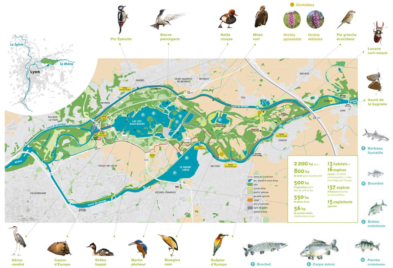 Carte de la faune du Grand parc