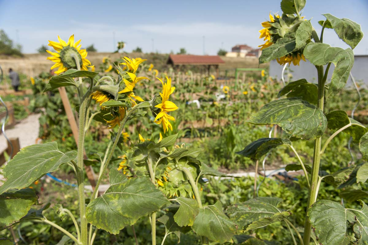 Jardins de la Balme - juillet 2015